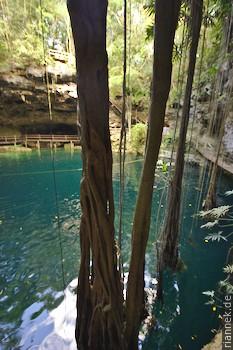 Cenote X'Canché bei Ek'Balam, Valladaloid